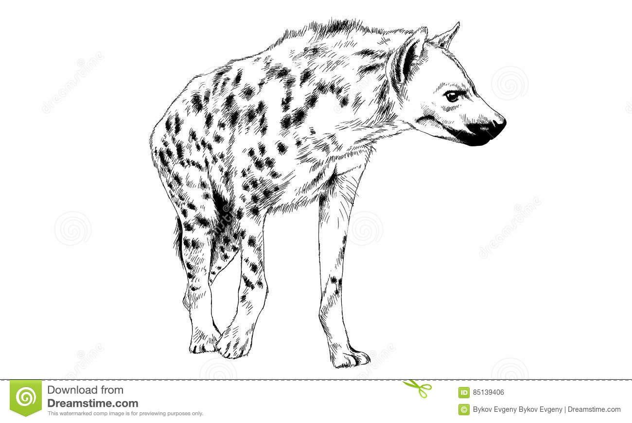 Silhouette Of A Hyena Stylized By Bushes On A White Background Cartoon Vector
