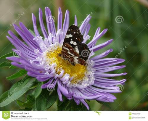 small resolution of i photograph butterfly beautiful flower summer very purple inside yellow has petals sits macro lot greenery