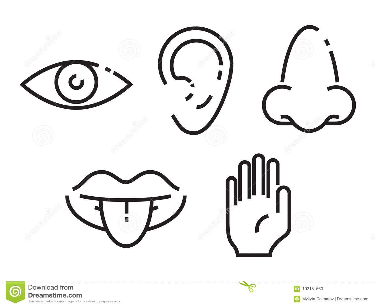 Icon Set Of The Five Human Senses Simple Minimal Line