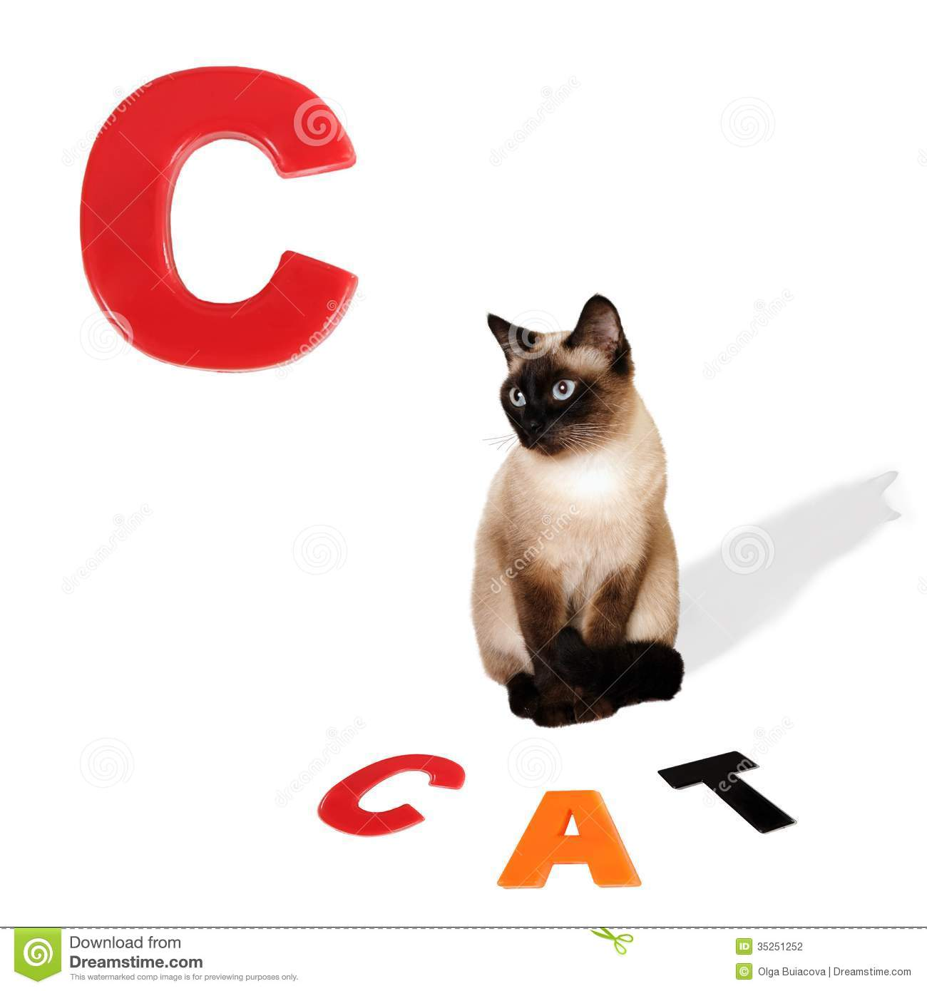 Illustrated Alphabet Letter C And Cat Stock Photo
