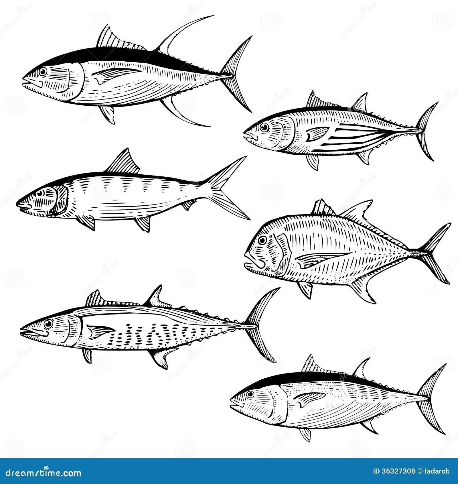 Illustrated Fish Stock Vector Illustration Of Fish Life