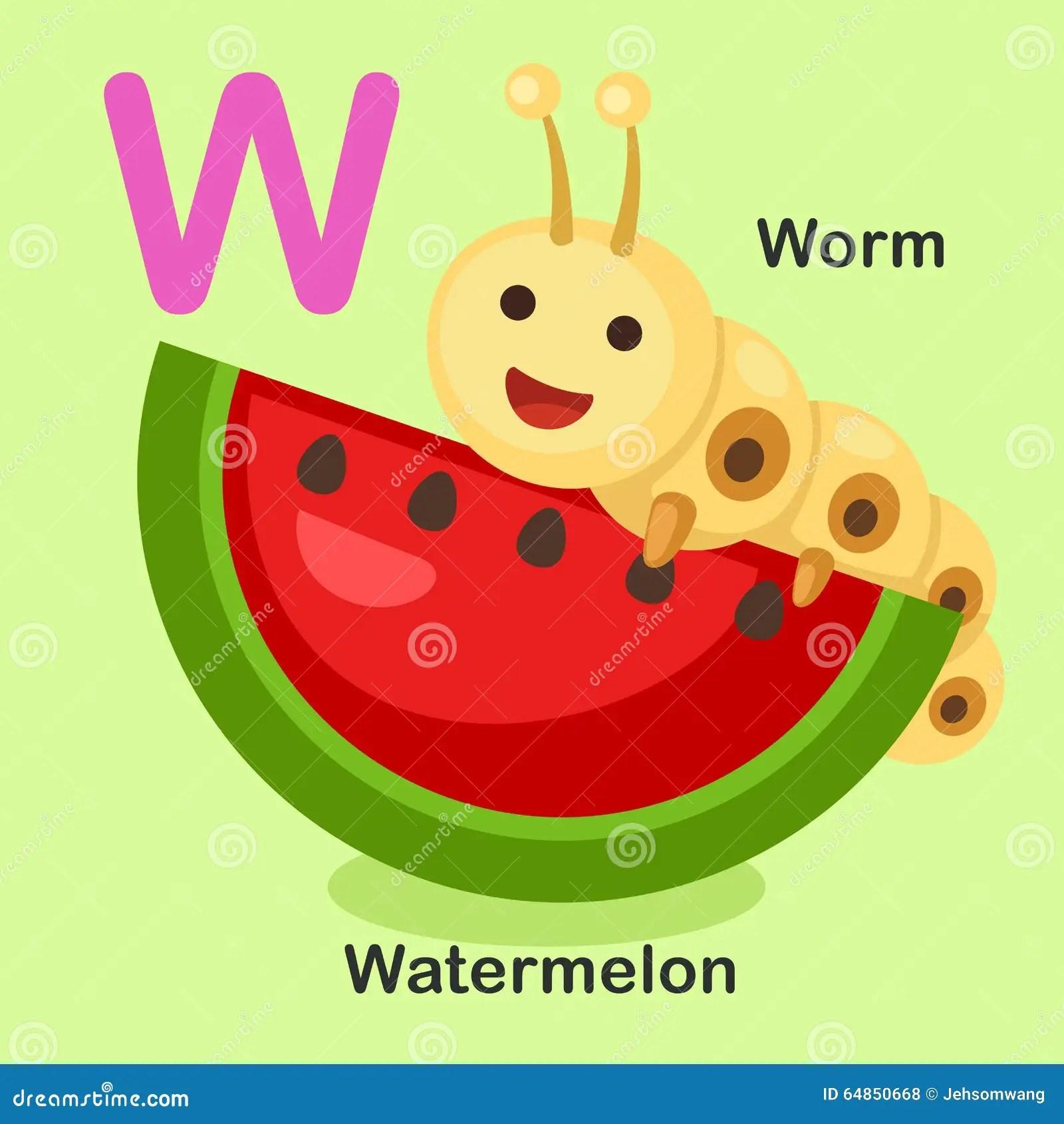 Illustration Animal Alphabet Letter W Watermelon Worm Stock Vector
