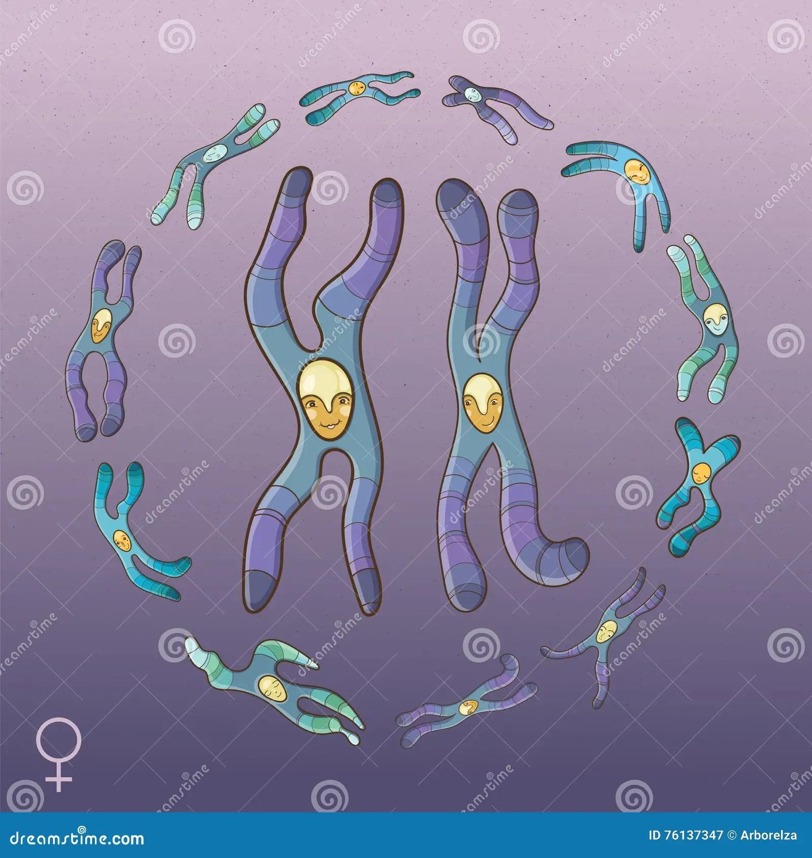 Genotype Cartoons Illustrations Amp Vector Stock Images