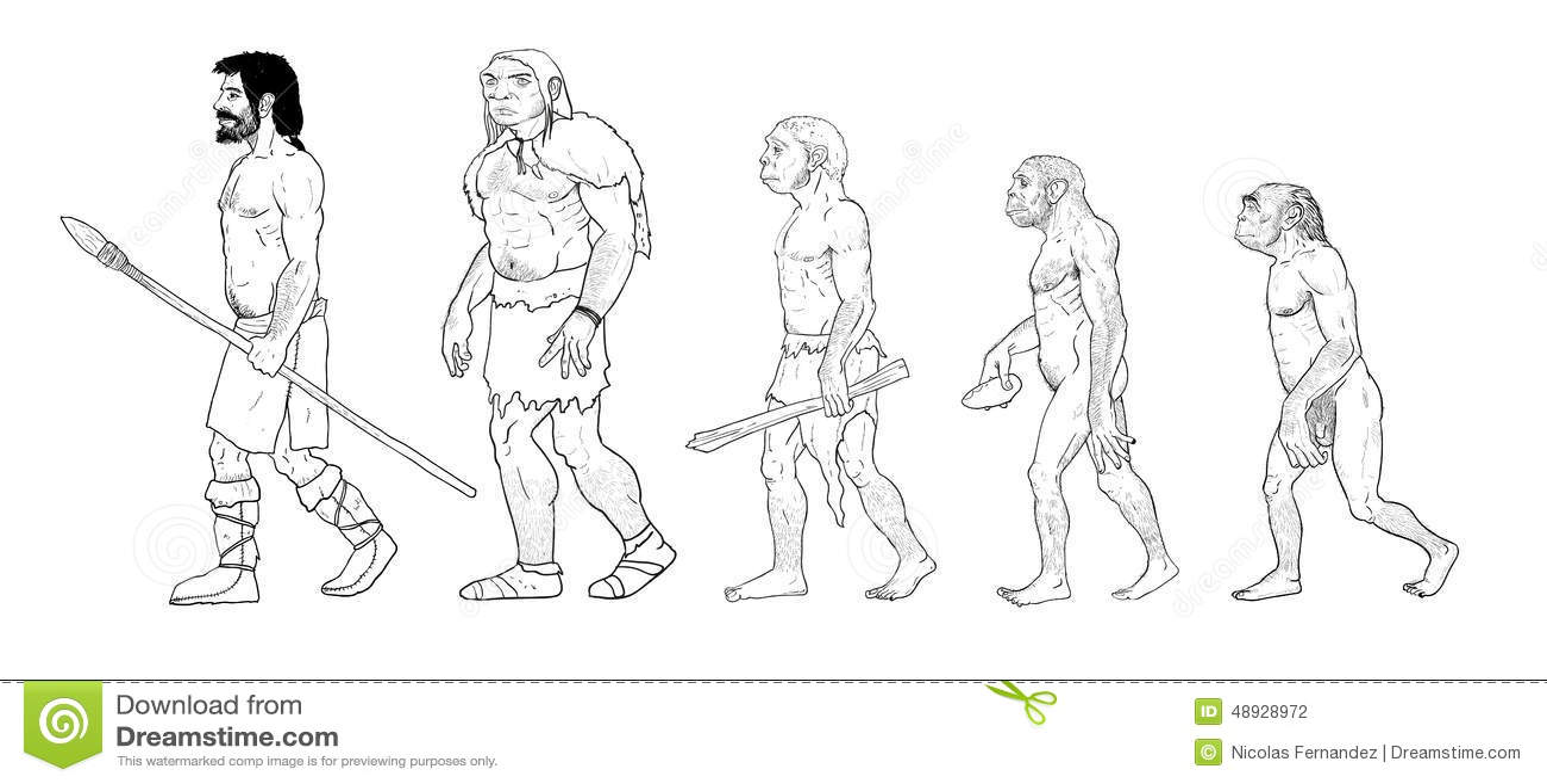 Illustration D'évolution Humaine Illustration Stock