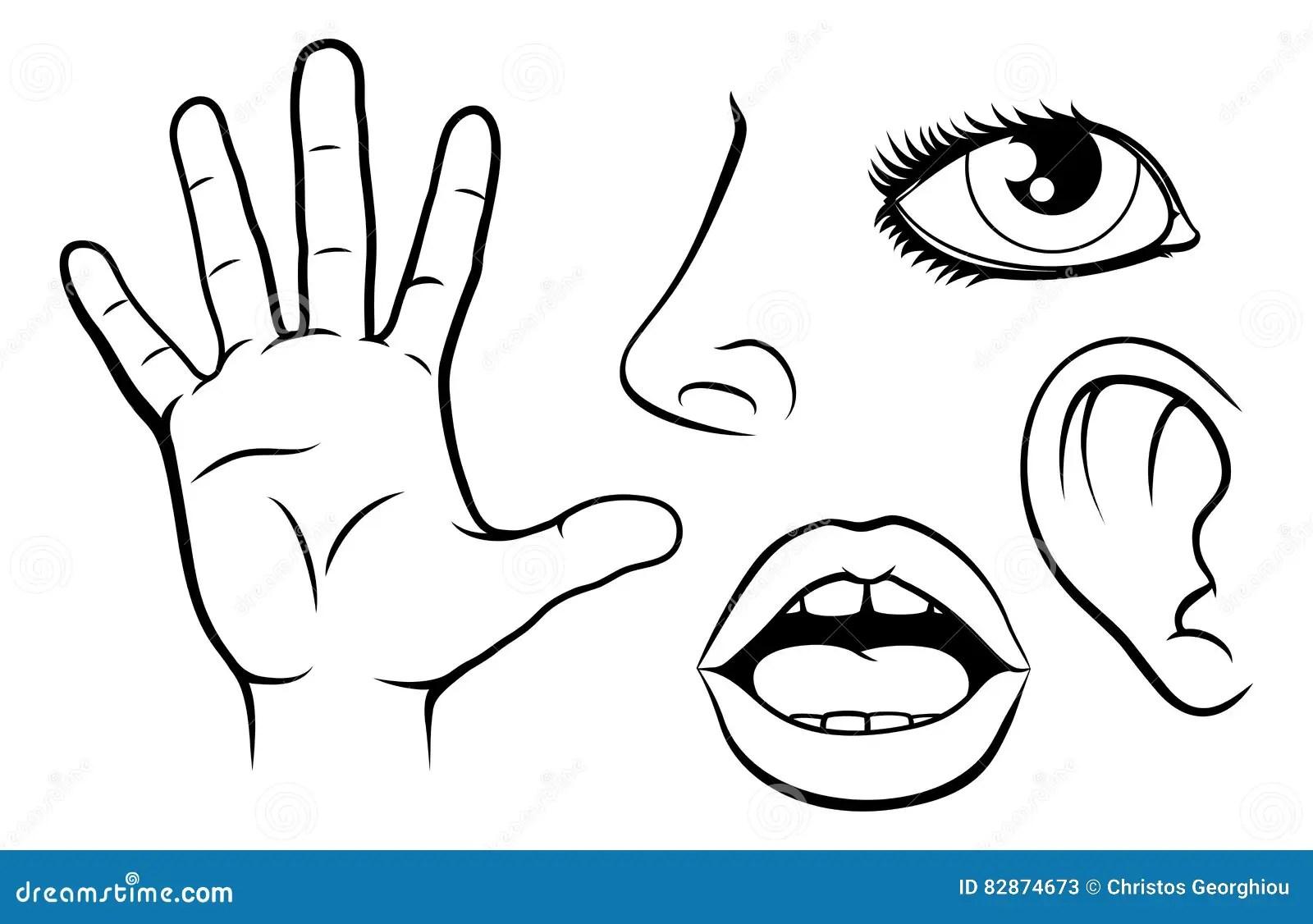 Illustration de cinq sens illustration de vecteur