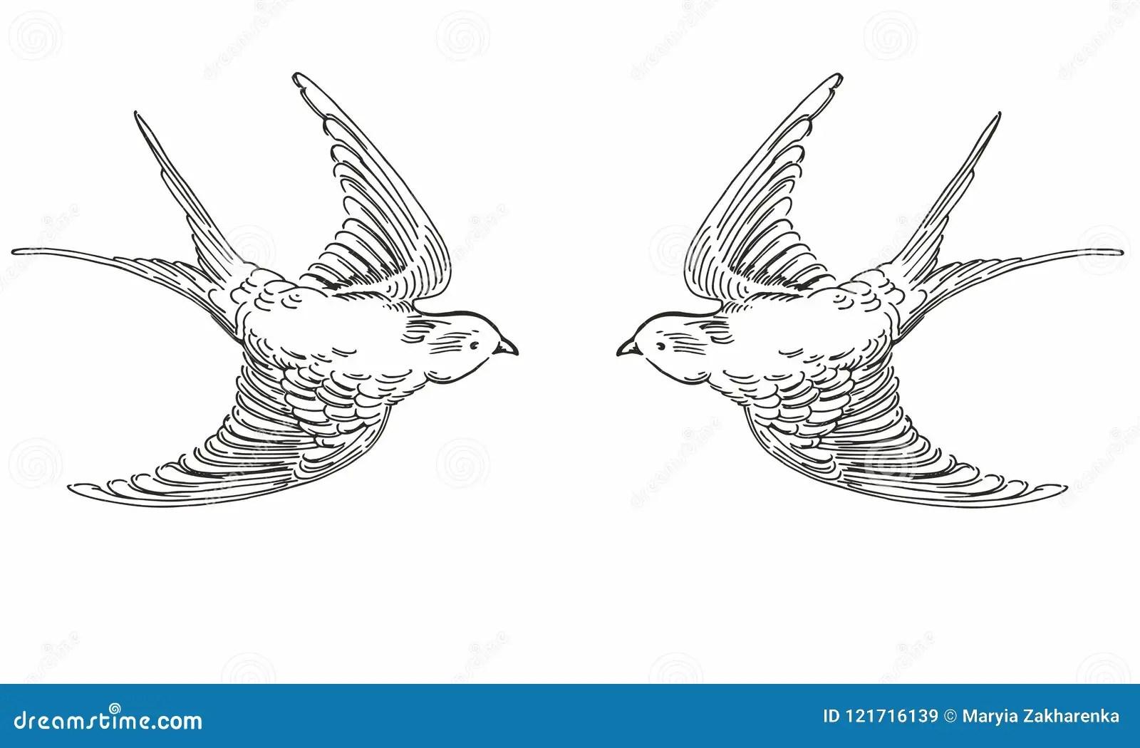 Birds Black White Stock Illustrations 8 896 Birds Black