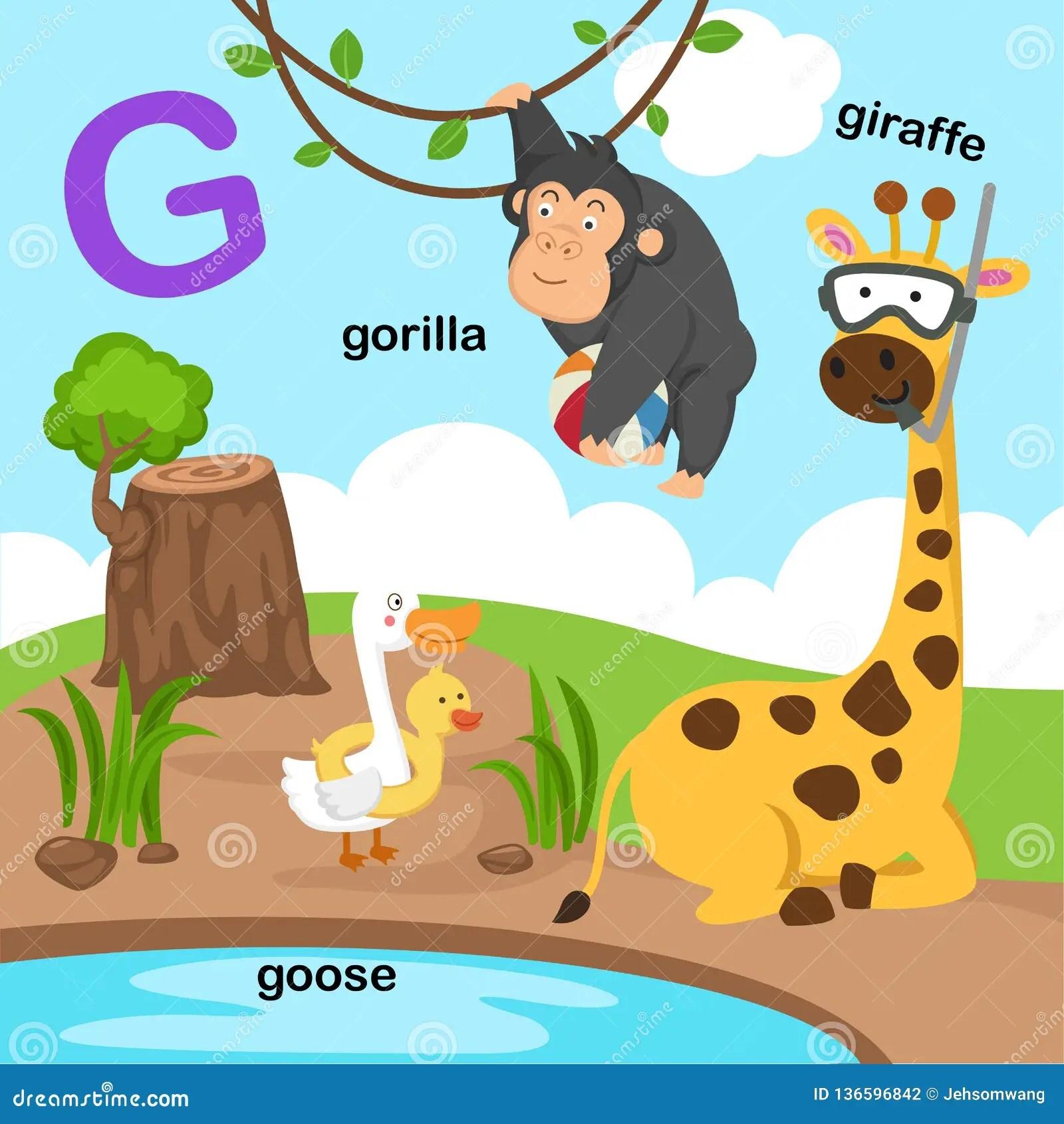 Illustration Isolated Alphabet Letter G Giraffe Goose