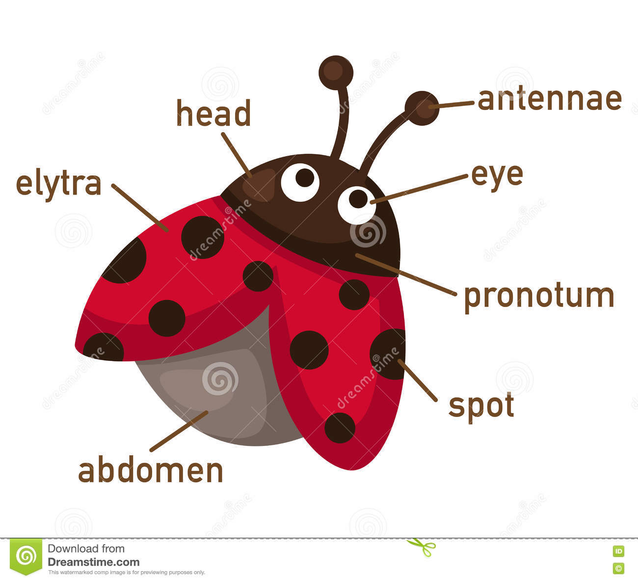 Illustration Of Ladybug Vocabulary Part Of Body Stock