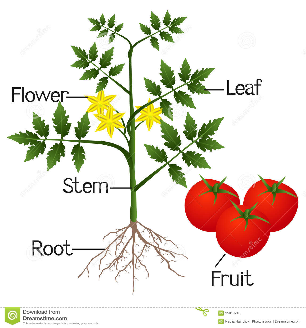 Worksheet Label Parts Of A Pepper Plant