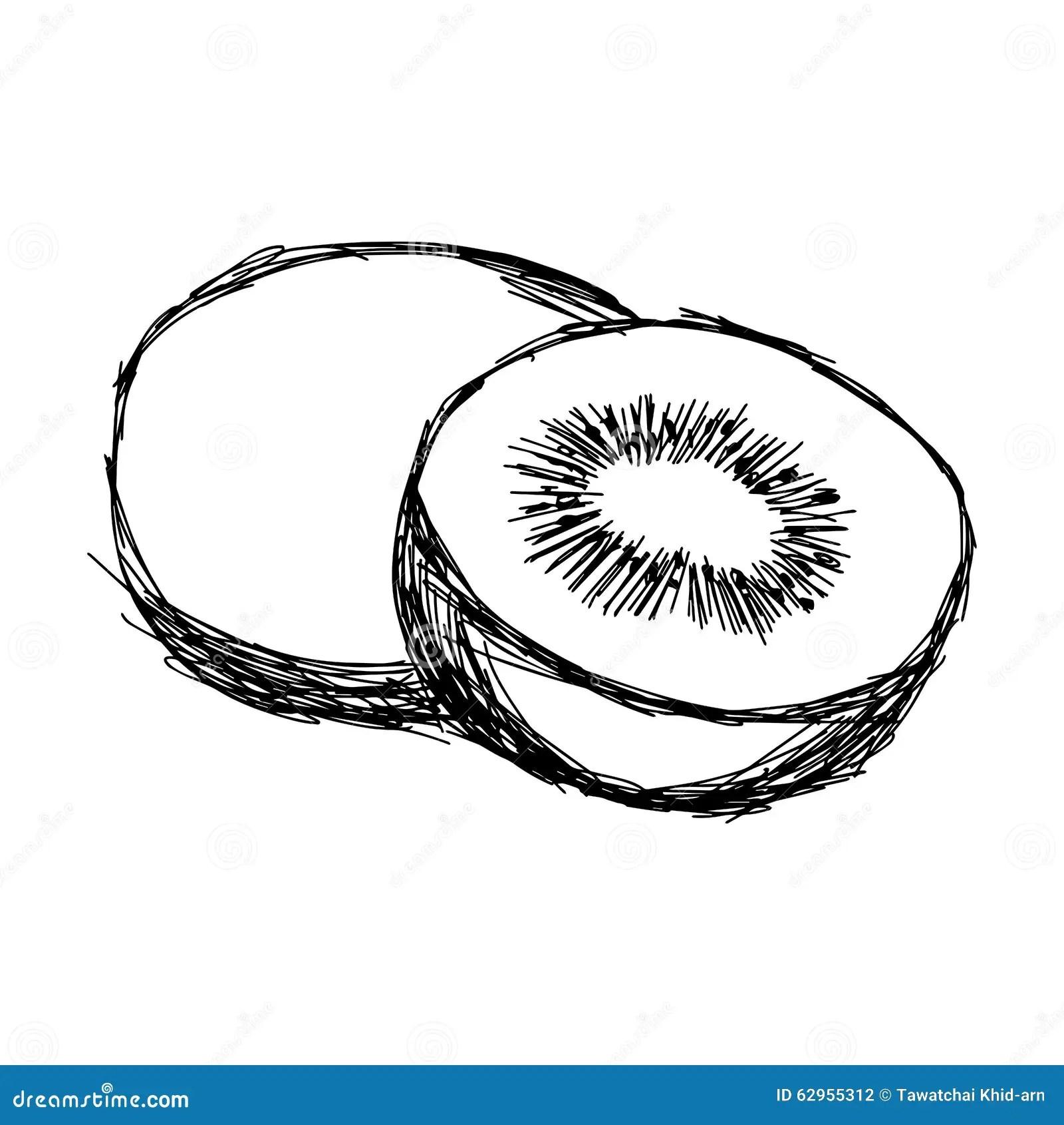 Illustration Vector Doodle Hand Drawn Of Sketch Kiwi