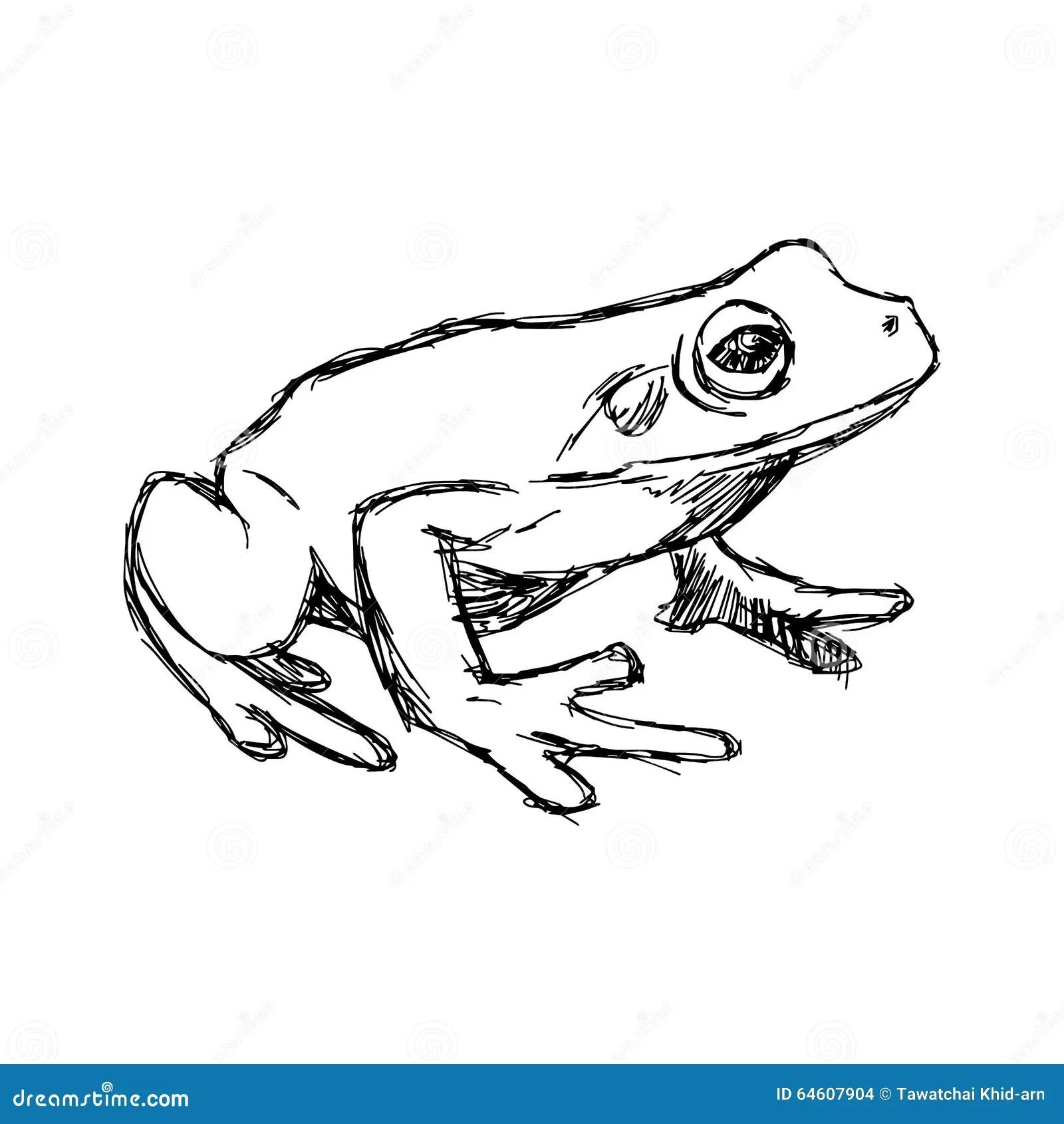 Toad Frog Vintage Illustration Stock Illustration