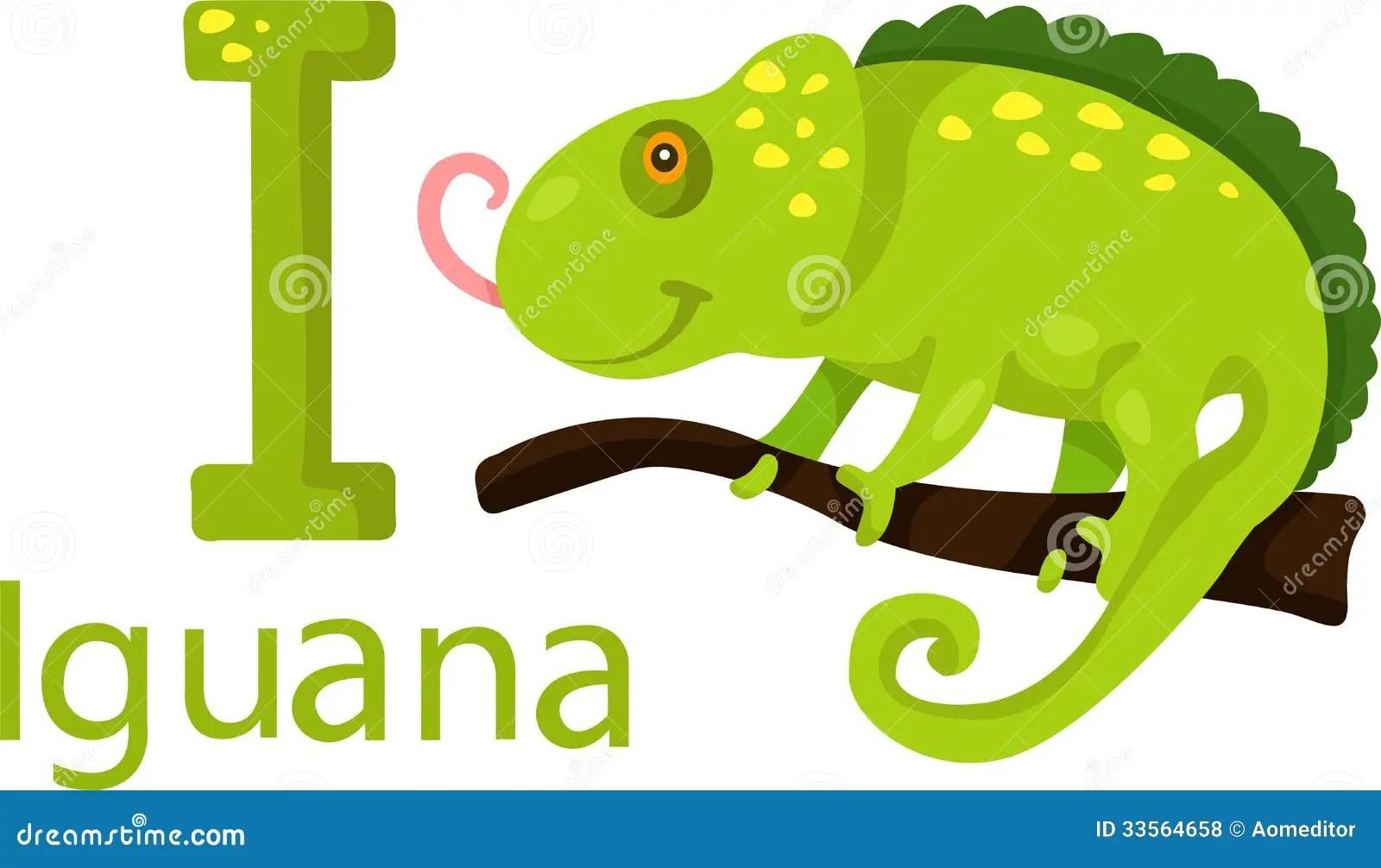 Illustrator Of I With Iguana Stock Vector