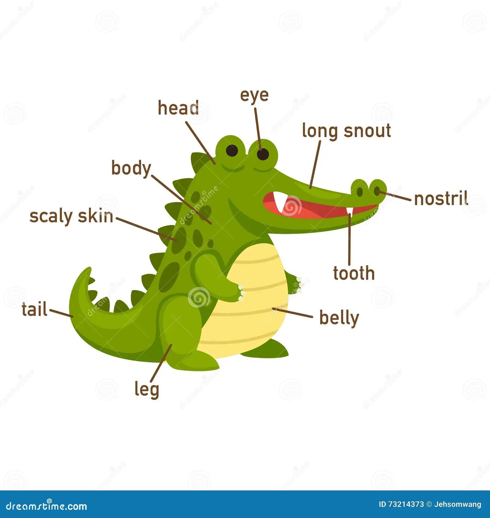 Illustrazione Della Parte Di Vocabolario Del Coccodrillo