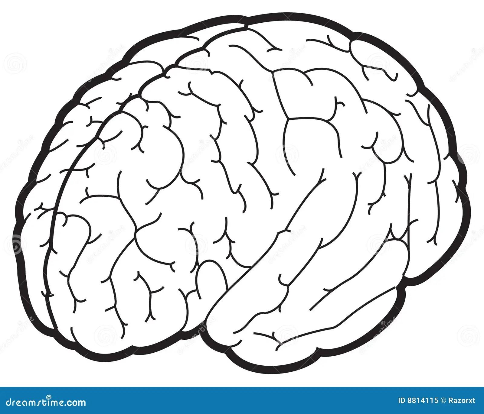 Illustrazione Di Un Cervello Fotografia Stock Libera Da
