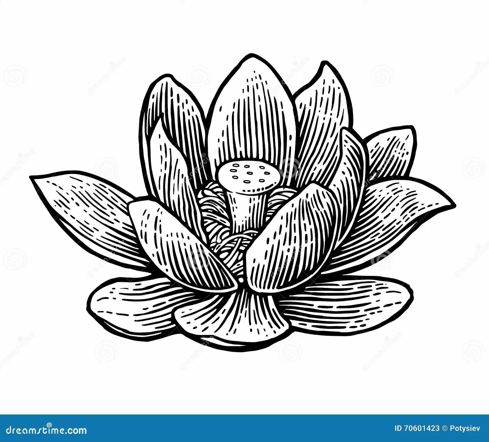 Illustrazione Di Zen Del Fiore Di Loto Vector L
