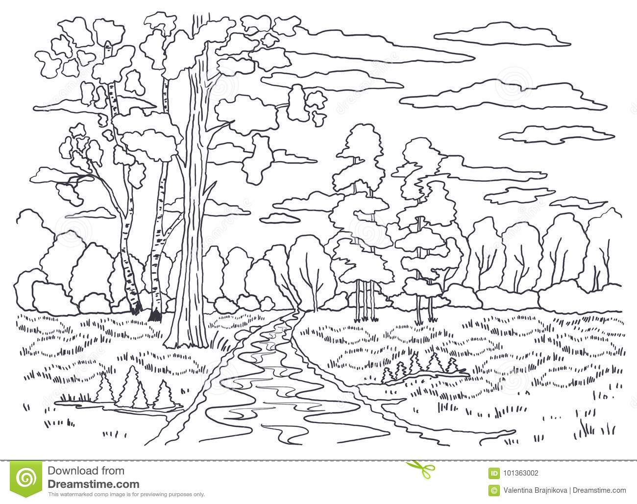 Template For Coloring. Landscape Painting. Forest, Trees