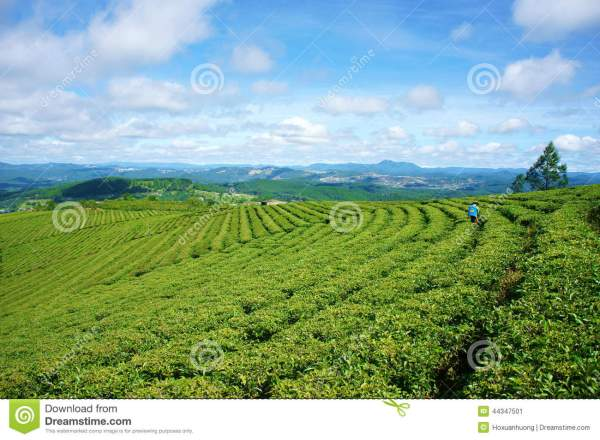 Beautiful Sunny Country Farm Landscapes