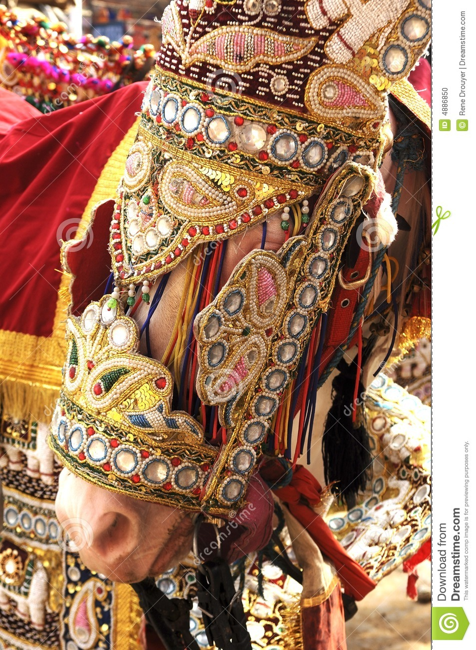 India Jaipur Decorated Horse For A Wedding Stock Photo