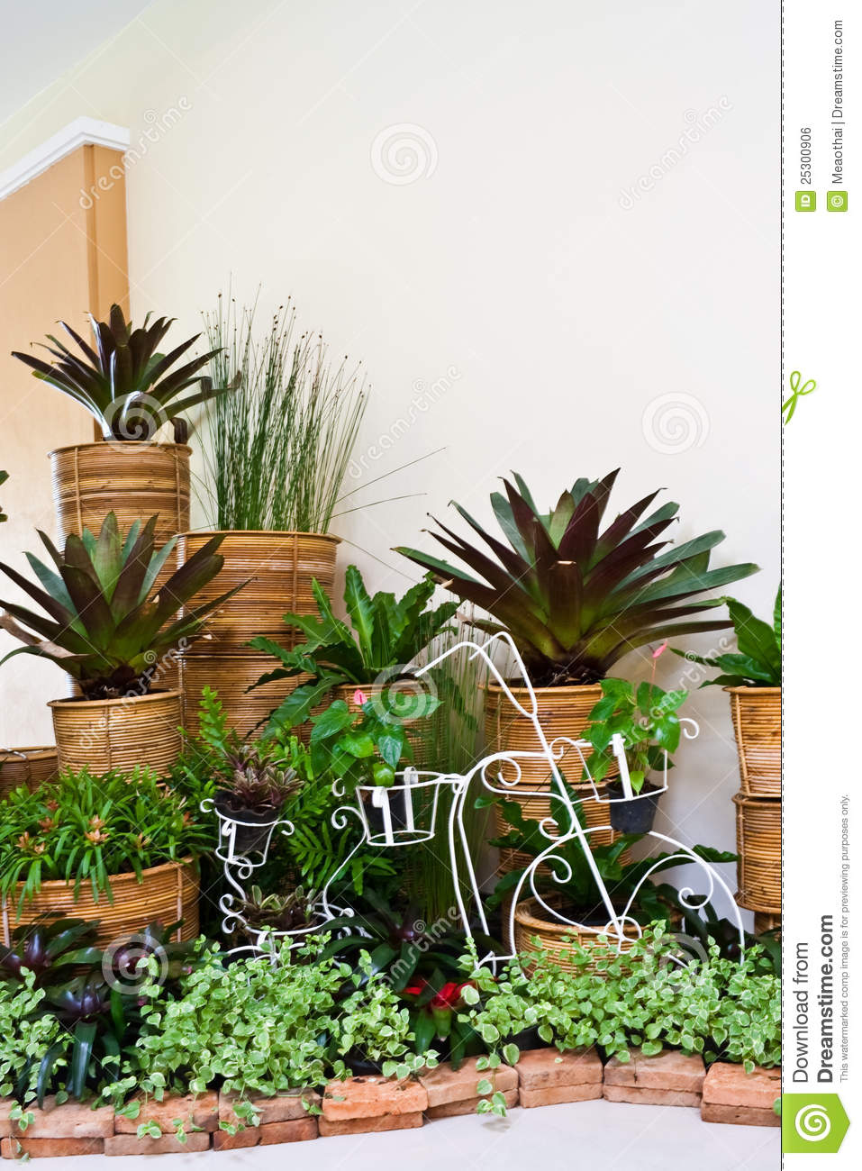 Indoor Garden For Room Corner Decoration Stock Photo