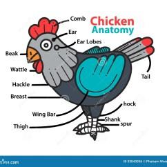 Chicken Skeleton Diagram Kia Rio 2005 Radio Wiring Infographic Anatomy Of A Stock Vector