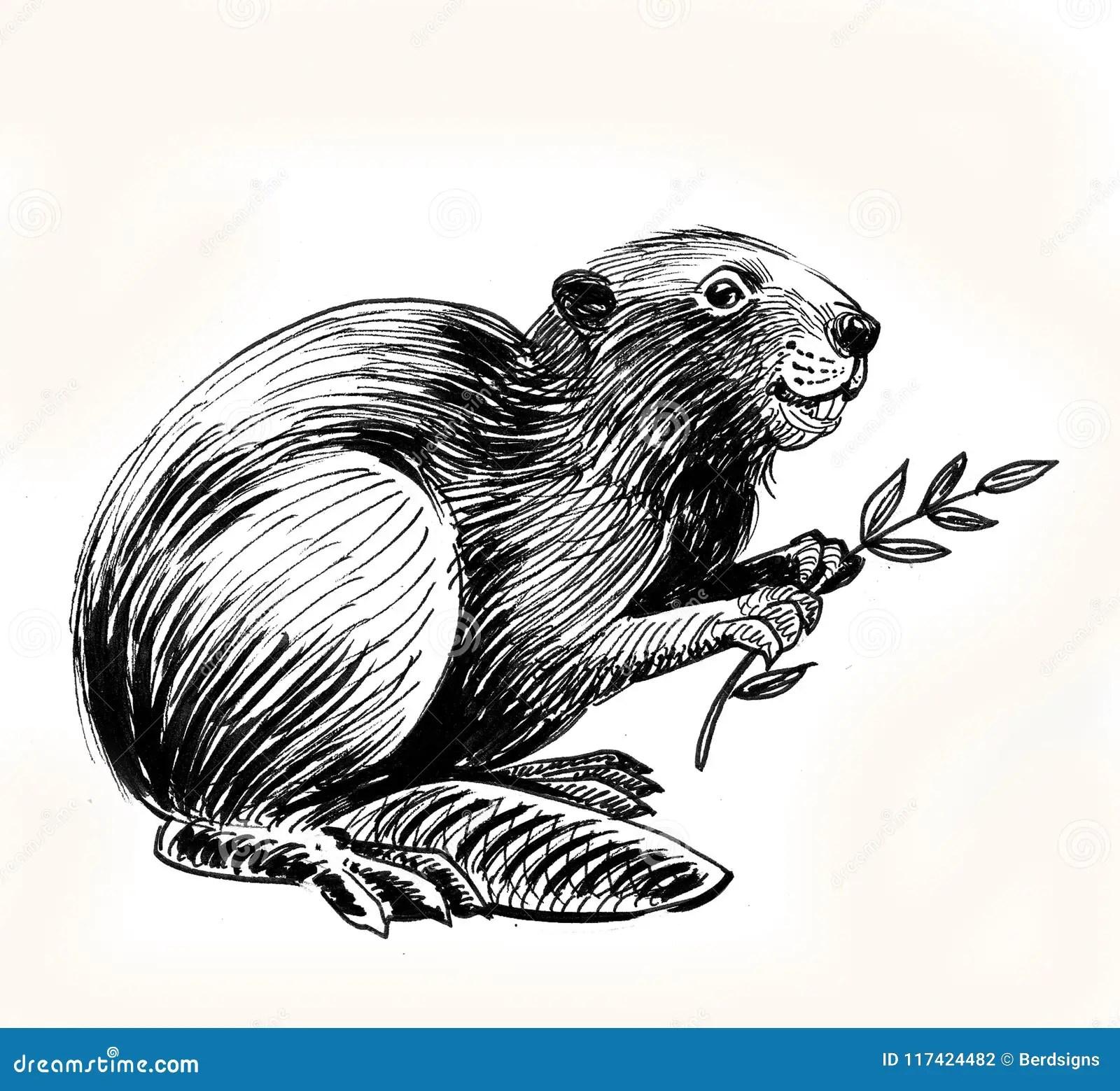 Beaver Cartoons Illustrations Amp Vector Stock Images