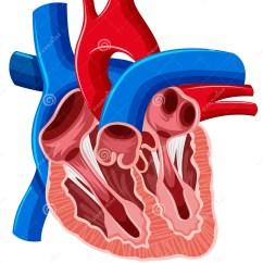 Heart Diagram Inside 1991 Ford F 150 Starter Solenoid Of Human Stock Vector Illustration Body