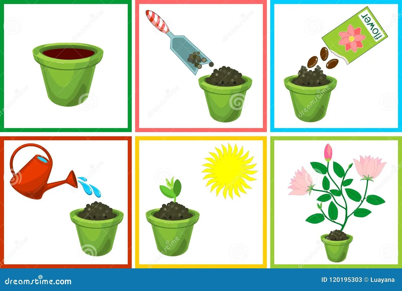 Instructies Op Hoe Te Om Bloem In Zes Stappen Te Planten