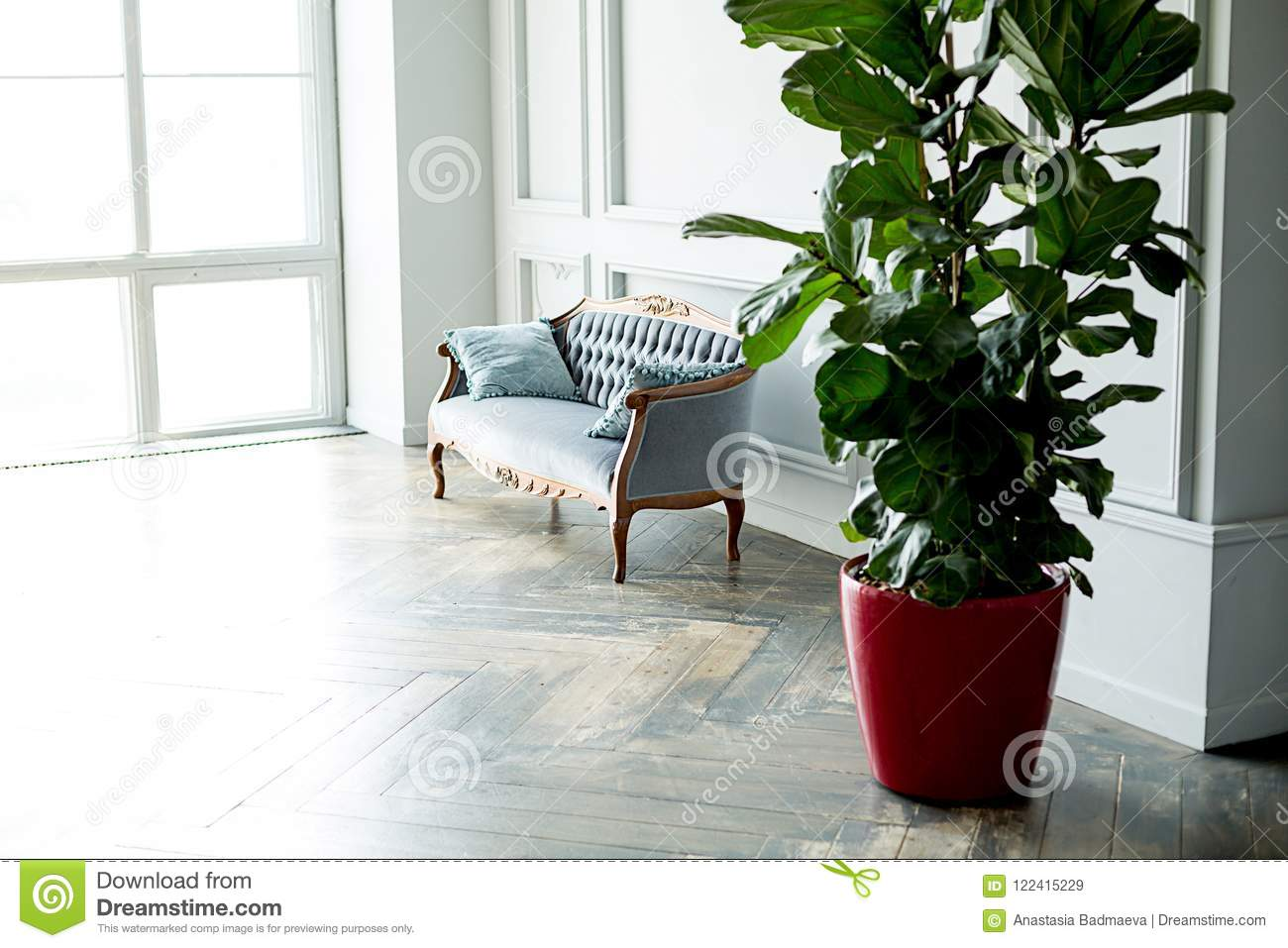 big living room couches modern side chairs for an interior of a sofa and rubber plant stock