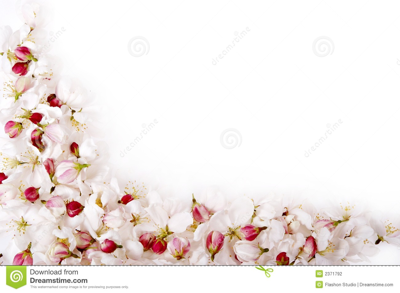 Black And White Girl Wallpaper Drawing Isolated Cherry Blossom Border Stock Photography Image