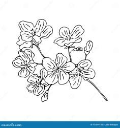 cherry outline branch blossom cartoon