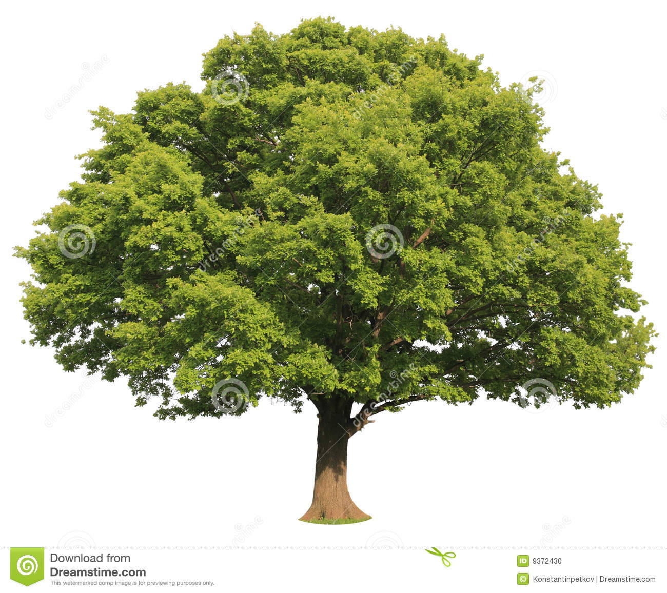 Isolated Tree Stock Photo Image Of Dense Huge Branch
