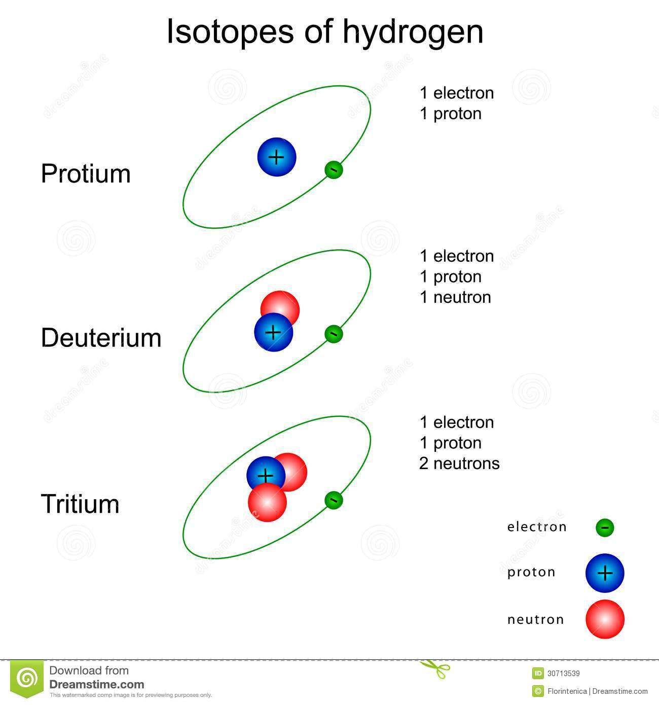 Isotopes Of Hydrogen Stock Vector Illustration Of Science