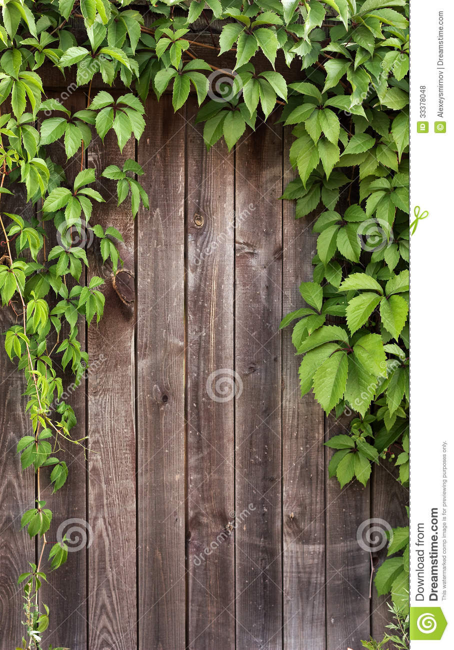 Ivy Frame On Wooden Fance Royalty Free Stock Photos