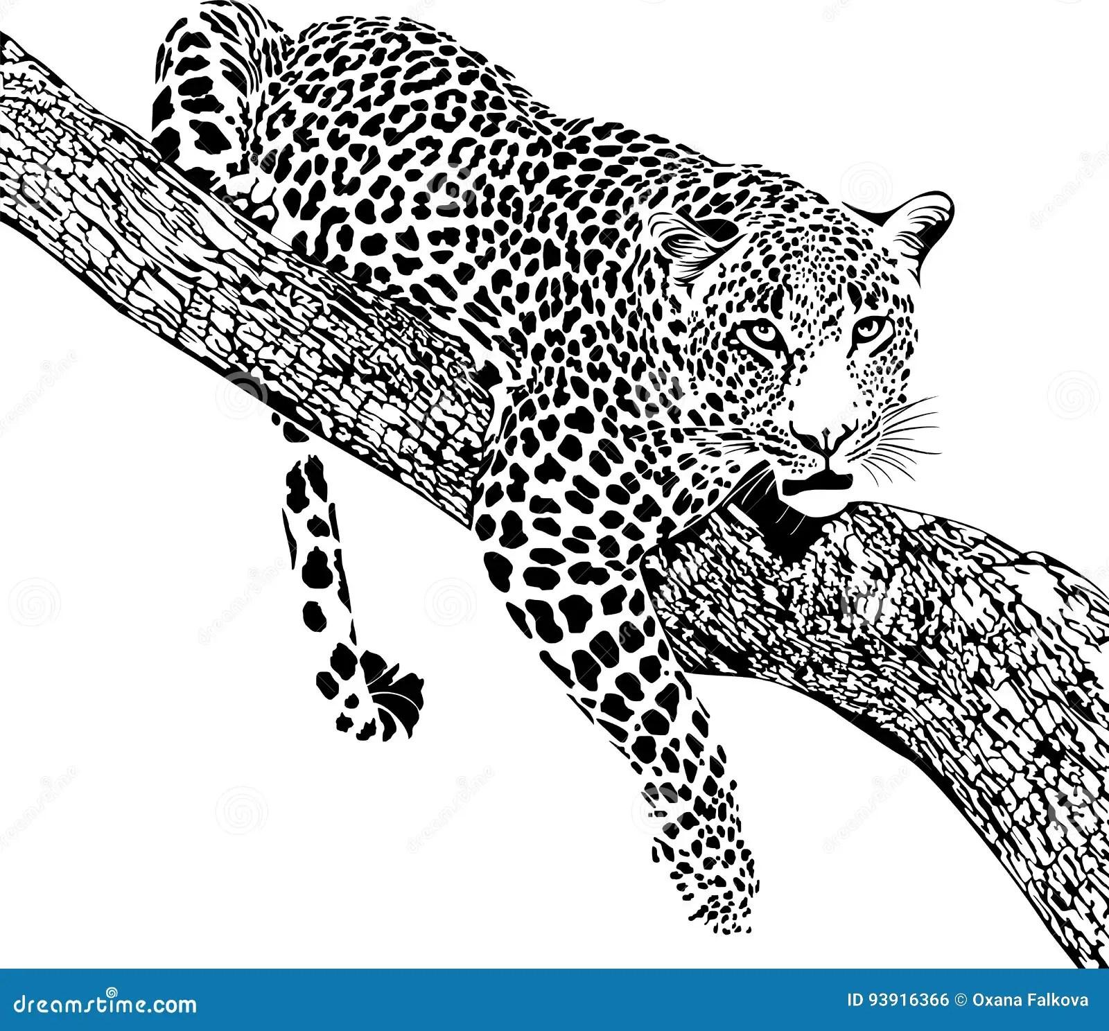 Jaguar Stock Vector Illustration Of Africa African