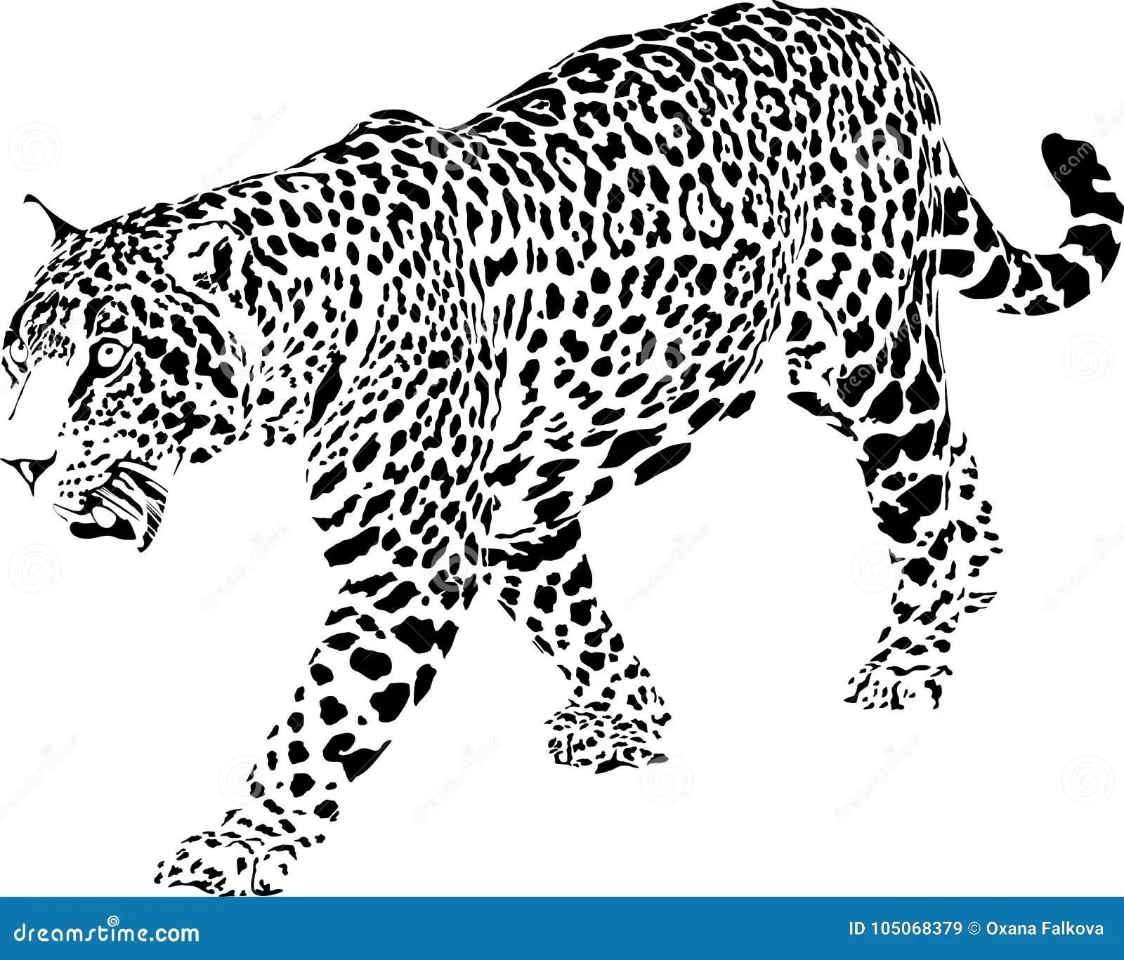 Jaguar Stock Vector Illustration Of Painting Carnivore