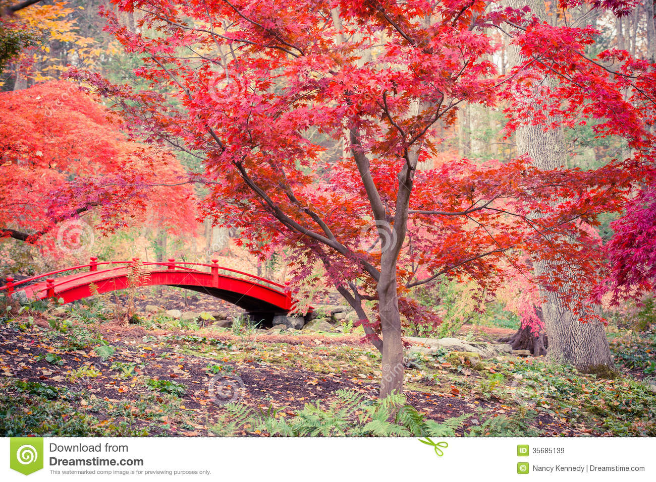 Fall Wallpaper Japan Japanese Garden Stock Image Image Of Fall Maples