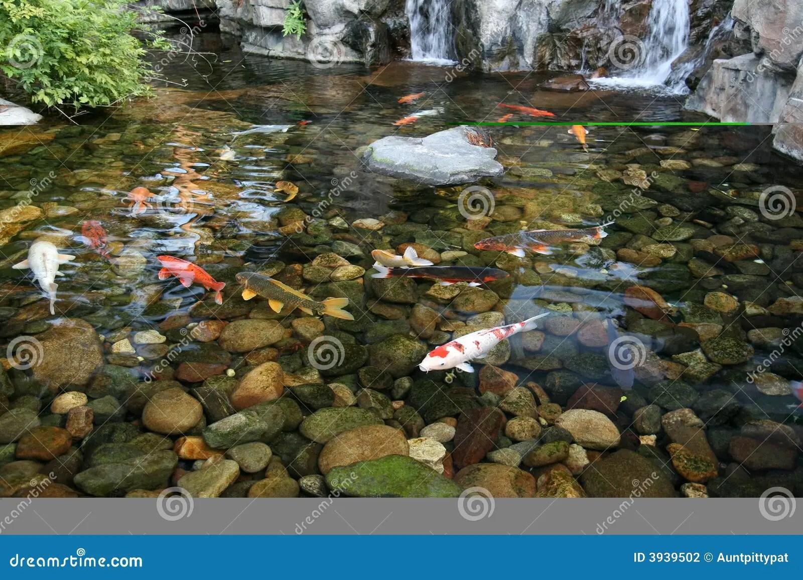 Japanischer Koi FischTeich Stockfotografie  Bild 3939502