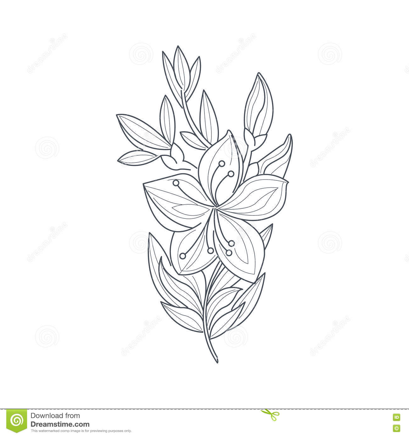Jasmine Flower Monochrome Drawing For Coloring Book Stock