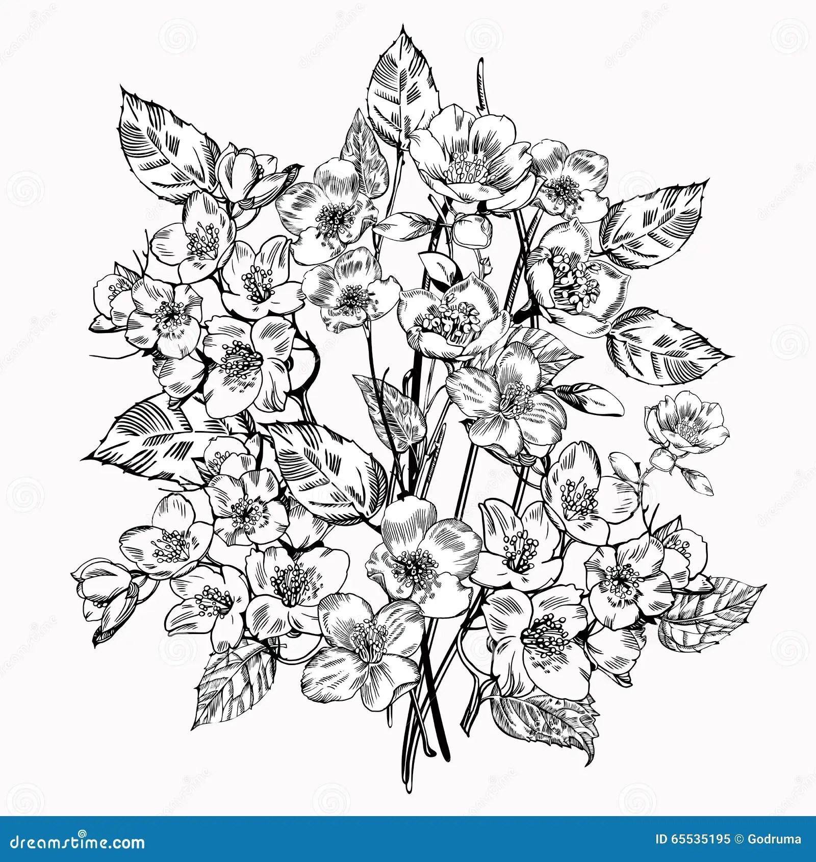 Jasmine Flower Vintage Elegant Flowers Black And White