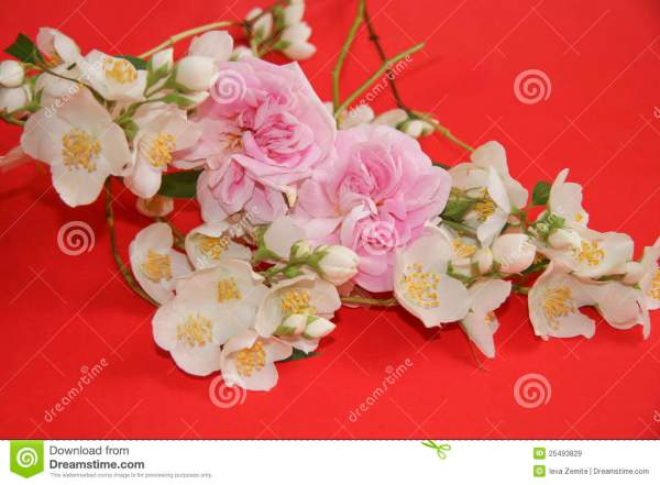 Jasmine And Rose Flowers Royalty Free Stock Images Image