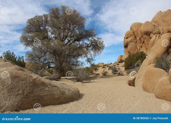joshua tree national park dry creek