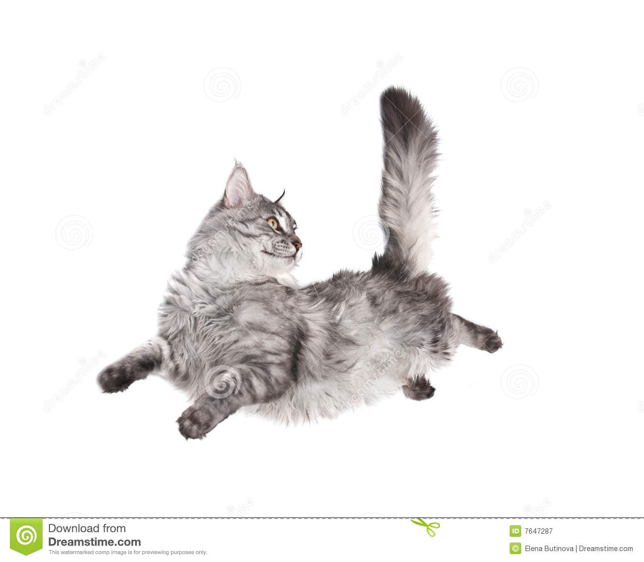 Cute Cat Images For Wallpaper Jumping Cat Royalty Free Stock Photography Image 7647287
