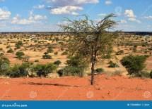Kalahari Desert Namibia Stock Of African