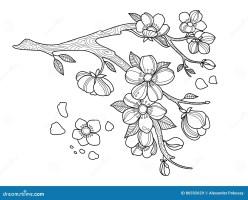 Kirschblüten Malbuchvektorillustration Vektor Abbildung ...