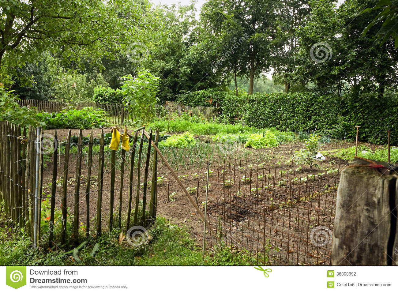 Country vegetable gardens - Stock Photography Kitchen Garden Country Vegetable Fence Next To Farm Summer