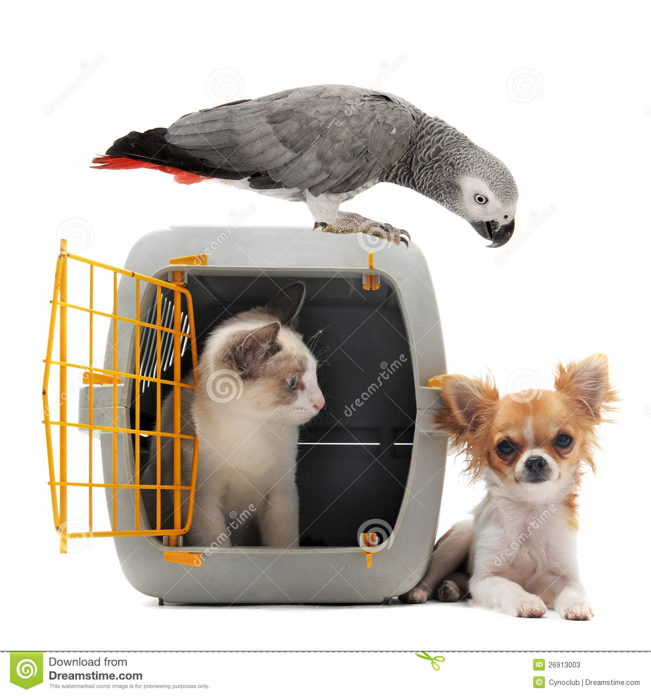 Kitten In Pet Carrier Parrot And Chihuahua Stock Photos  Image 26913003