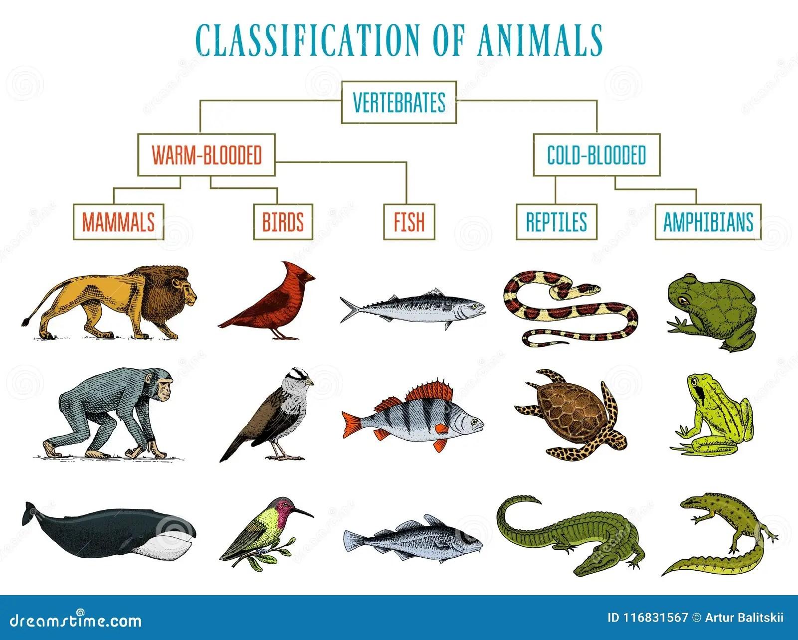 Biology Classification Worksheet