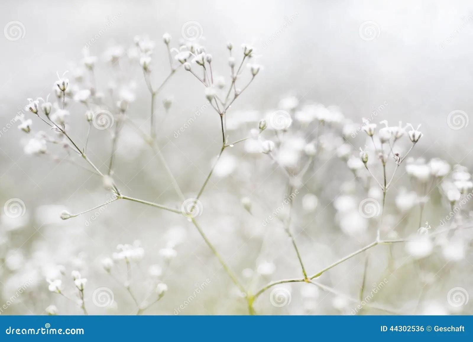 Kleine Defocused Weie Blumen Stockfoto  Bild von aufbau