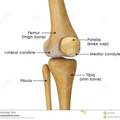 Diagram Of Tibia Stress Fracture 2002 Dodge Neon Wiring Radio Knee Joint Stock Illustration Pain