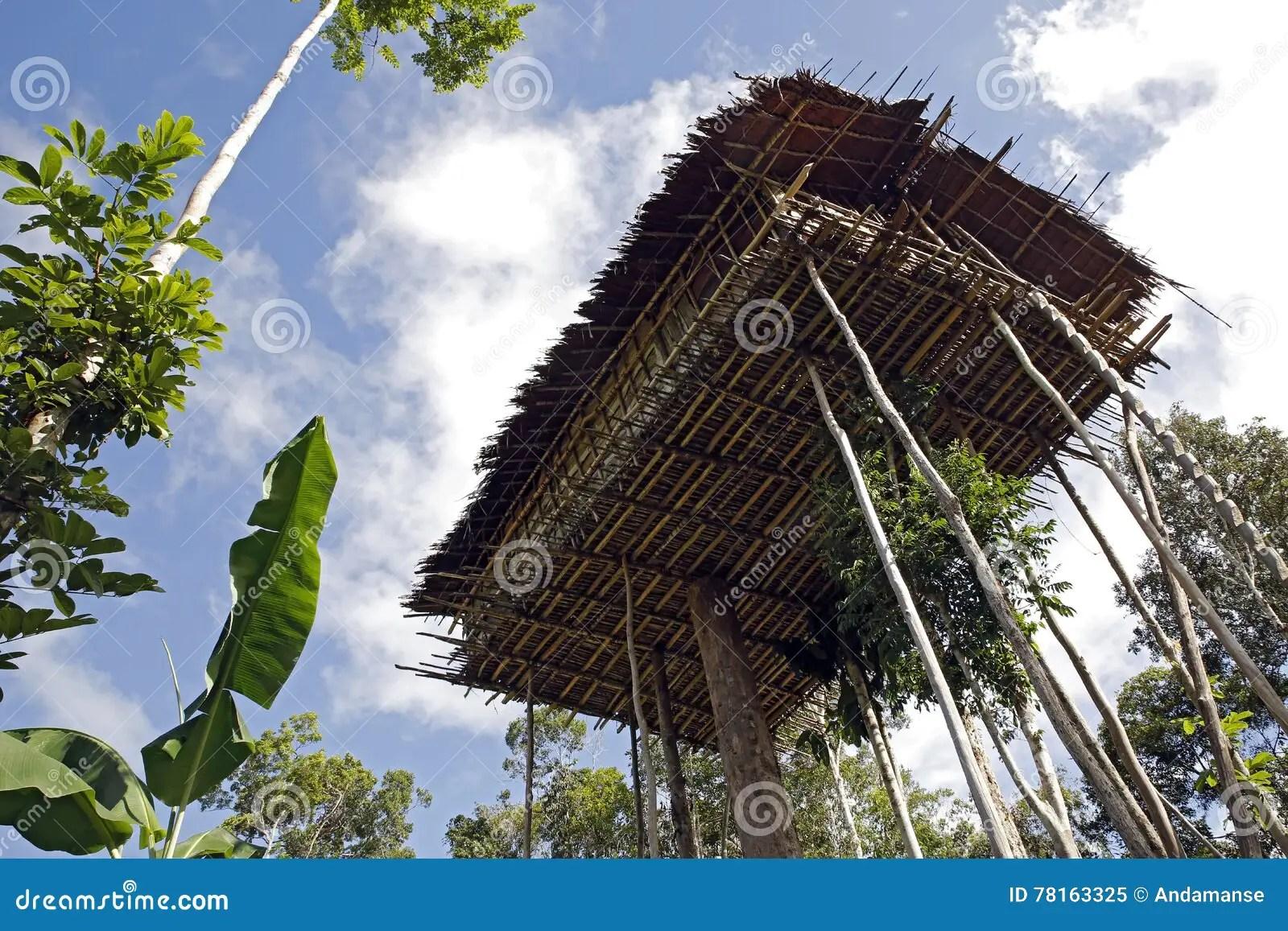 Korowai Tree House Stock Image Image Of Lowland Treetop 78163325
